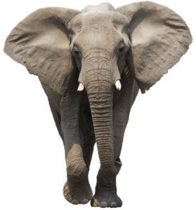Meditatie PAX Povestea unui elefant