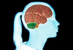 dezvoltare creier adolescent comportamente risc